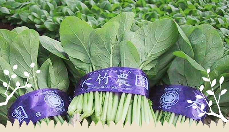 湘南茅ヶ崎の大竹農園は、小松菜・ほうれん草など菜っ葉専門農家です